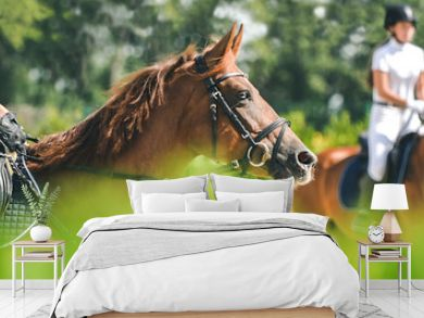 Horse horizontal banner for website header design. Dressage horse and rider in uniform during equestrian competition. Blur green trees as background.