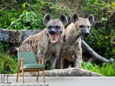 Family spotted hyena in the wild.