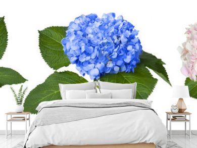 Nice white blue and pink hydrangeas