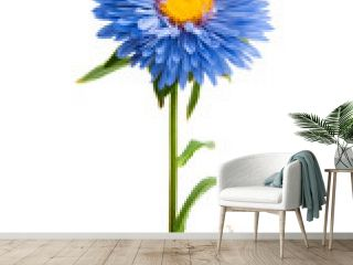 blue aster isolated