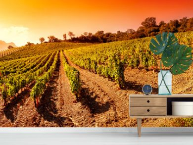 Sunrise on a hillside vineyard in Sardinia. Overview. Traditional agriculture.