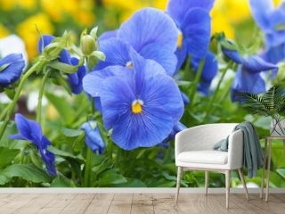 Flowers Petunia blue close. Flower blossom nature in the garden.