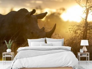 Portrait of wild free roaming african white rhino