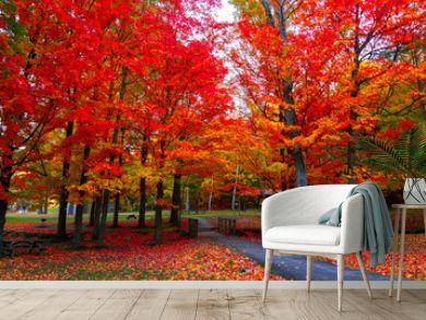 Beautiful fall foliage in the northeast USA