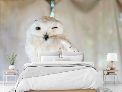 Owls Portrait. owl eyes. Beautiful background.