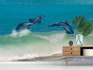 Group of dolphins jumping on the water - Beautiful seascape