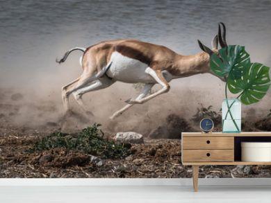 fast fleeing springbok
