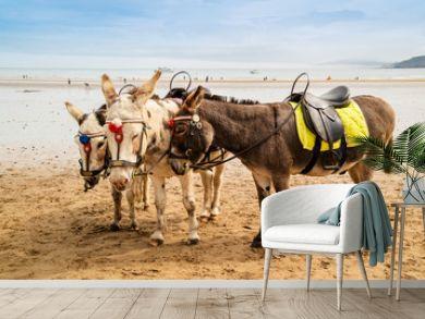 Trio of donkeys at a sandy beach resort in UK.