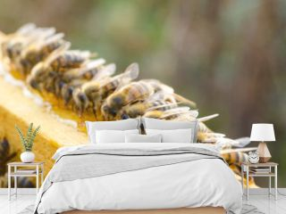 Bees eating honey