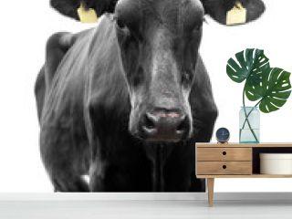 cow black on white background