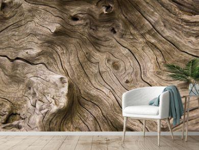 drift wood