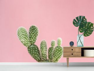 Cactus on pink background.