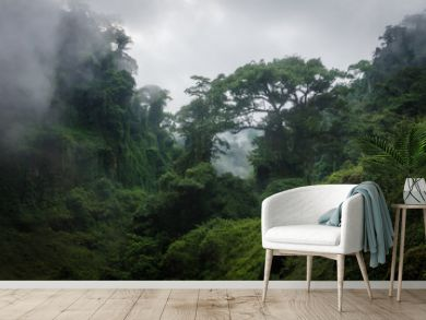 Foggy overgrown hills in rainforest of Cameroon, Africa.
