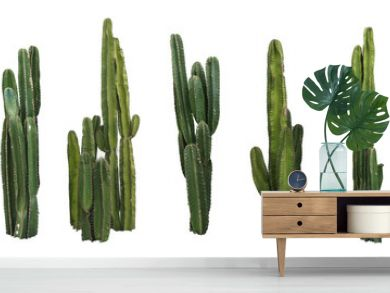 Set of cactus real plants isolated on white background