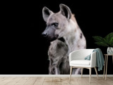 Close up  Hyena isolated on black background