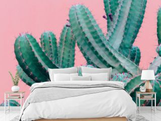 Trendy plants on pink content. Cactus on pink background wall.