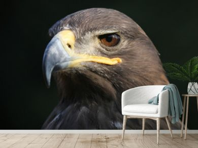 eagle portrait with natural background