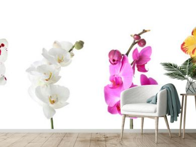 Set of beautiful colorful orchid phalaenopsis flowers on white background