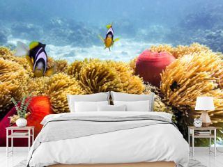 Blue ocean, colorful tropical coral reef and school of reef fish. Snorkeling on the tropical reef. Underwater paradise seascape.