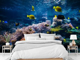 underwater coral reef landscape  with colorful fish