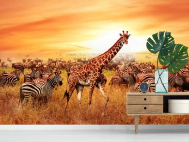 Wild African zebras and giraffe in the African savannah. Serengeti National Park. Wildlife of Tanzania. Artistic image.