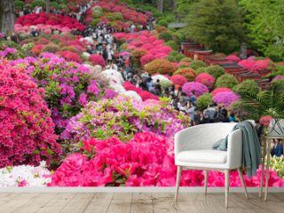 Azalea Festival at Nezu Shrine in Tokyo, Japan 色とりどりのツツジが咲く日本庭園