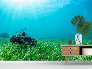 small fishes lives at coral and sea grass bed