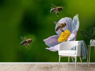 The panoramic view the garden flower and bees