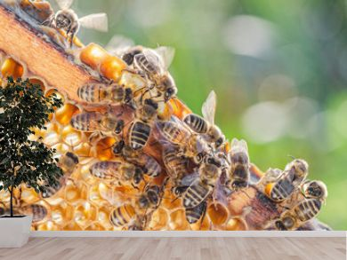honey bees on honeycomb in apiary in summertime