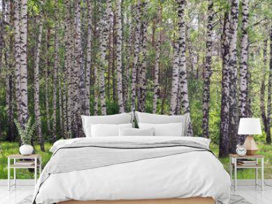 summer birch grove