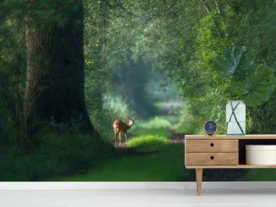 Alert roe deer on a summer forest trail.