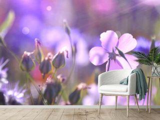 Blumenwiese im Sommer - Blumen Wiese Hintergrund Panorama