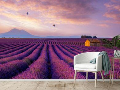 Lavender Dream - Valensole France