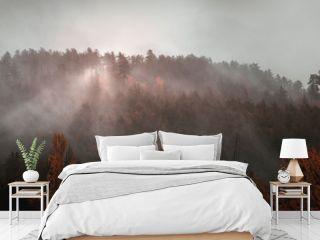 Après la pluie, la brume exhale les effluves de la foret automnale - After the rain, the mist exhales the fragrance of the autumnal forest