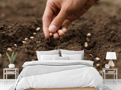 Hand growing seeds of vegetable on sowing soil at garden metaphor gardening, agriculture concept.