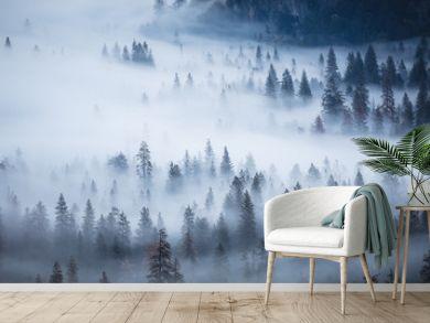 Yosemite Trees in Fog in California USA