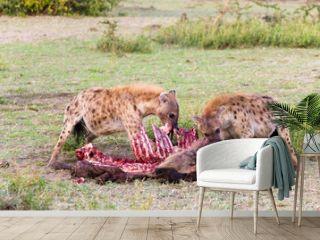 Hyenas eating wildebeest, Serengeti National Park, Africa