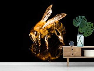 Honey bee macro, isolated on black background. Bee concept.