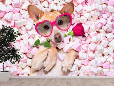 valentines wedding dog in love wit rose