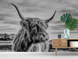 Close-Up Of Highland Cattle Standing On Land Against Sky