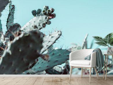 Succulent cactus plant natural background
