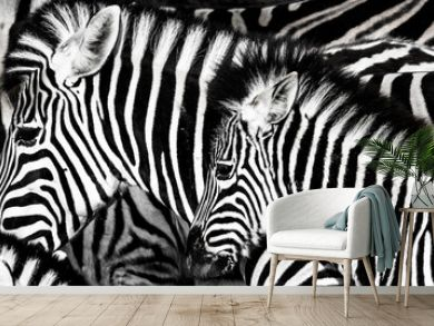 background which the structure of hide of zebra is represented on