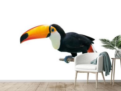 Toucan bird in a tree branch on white isolated background