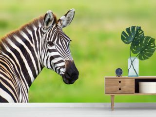 Closeup zebra head against green blurred background