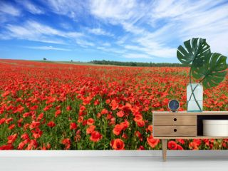 Beautiful summer day over poppy field