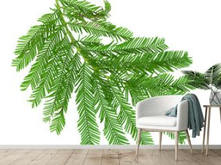 Green leaves mimosa isolated on white background