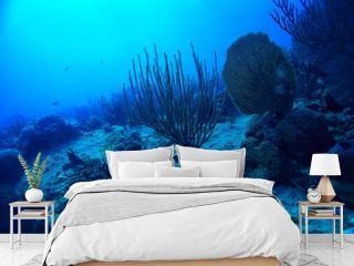 coral reef underwater landscape, lagoon in the warm sea, view under water ecosystem