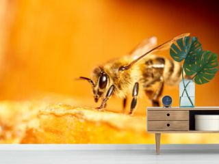 Honey bee sits on a frame in front of a blurred background with shallow depth of field.