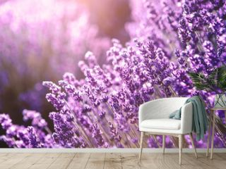 Selective focus Lavender flowers at sunset rays, Blooming Violet fragrant lavender flower summer landscape. Growing Lavender, harvest, perfume ingredient, aromatherapy. Lavender field lit by sunlight