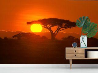 Paysage coucher de soleil en brousse, arbre, contre jour, ombre chinoise Afrique, Kenya